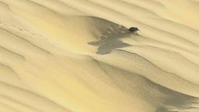 Mestkever in woestijn stock footage