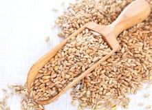 Mestolo di legno pieno dei semi del grano su fondo di legno bianco Fotografia Stock