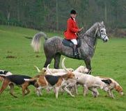 Mestre com hounds Foto de Stock Royalty Free