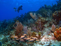 Mestre do mergulho de Brac do caimão fotografia de stock