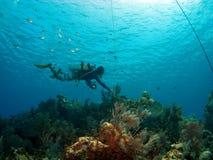 Mestre do mergulho que verific a amarração no caimão Brac Fotos de Stock Royalty Free