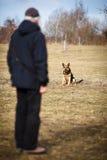 Mestre e seu cão obediente Imagem de Stock Royalty Free