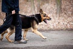 Mestre e seu cão obediente Fotografia de Stock Royalty Free