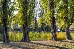 Mestsky或城市公园在科希策老镇,斯洛伐克 库存图片