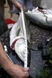 Mesure de poissons  Photographie stock libre de droits
