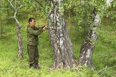 Mesure du diamètre d'un arbre photo libre de droits
