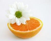 A metà arancio con la margherita bianca Immagine Stock