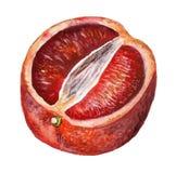 Metà dell'arancia sanguinella Royalty Illustrazione gratis