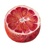 Metà dell'arancia sanguinella Illustrazione Vettoriale