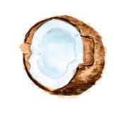 Metà della noce di cocco illustrazione di stock