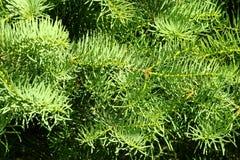 Metà di modello dell'arbusto Immagini Stock Libere da Diritti