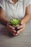Metà di sezione della donna che tiene piccola pianta in vaso Immagine Stock
