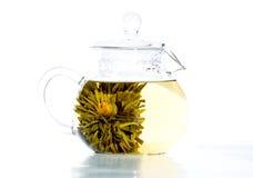 A metà ready il tè del fiore Fotografia Stock Libera da Diritti