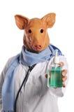 Metáfora de la gripe de los cerdos Imágenes de archivo libres de regalías