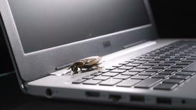 A metáfora do erro de software, barata anda em um teclado do portátil, foto macro com foco seletivo video estoque