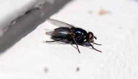 Metálico azul Foto de archivo libre de regalías