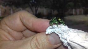 Metálico verde del insecto fotos de archivo