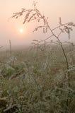 Met dauw bedekt gras Stock Afbeeldingen
