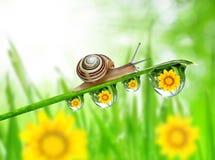 Met dauw bedekt gras Royalty-vrije Stock Afbeelding