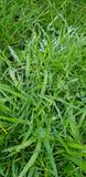 Met dauw bedekt gras stock foto