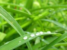 Met dauw bedekte Groen Stock Fotografie