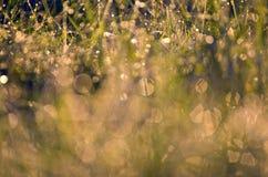 Met dauw bedekte het grasachtergrond van de onduidelijk beeldzomer Stock Foto's