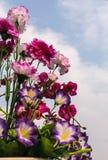 Met de hand gemaakte bloem op hemelachtergrond Royalty-vrije Stock Foto