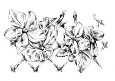 Met de hand gemaakte de schetskunst van de bloemtekening Stock Afbeeldingen
