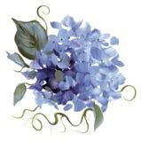 Met de hand geschilderde Hydrangea hortensia Royalty-vrije Stock Afbeeldingen