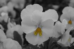 Met en gele bloem Stock Afbeeldingen