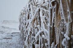 Met en place l'hiver Images stock