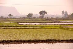met en place le riz Photos stock