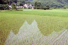 met en place le riz de réflexions Image stock