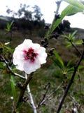 Met en purpere bloem Royalty-vrije Stock Foto's