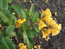 Met gele verdraaid bloem bloemen stock afbeeldingen