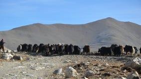 met Herder Royalty-vrije Stock Foto