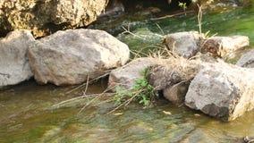 Met het lawaai van het water, de huidige rivier stock video