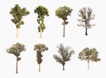 Met inbegrip van een boom op een witte achtergrond Royalty-vrije Stock Foto's