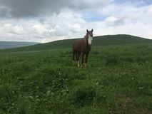 We met the lonely horse among the valley stock image