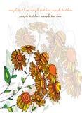 Met madeliefjes en sinaasappel Stock Afbeelding