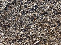 Met mulch bedekte grond Stock Fotografie