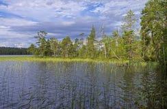 Met riet bedekte kreek op een rivier Stock Foto's
