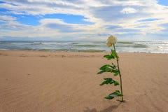 Met roze alleen op het strand Royalty-vrije Stock Foto's