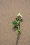 Met roze alleen op het strand Stock Afbeelding