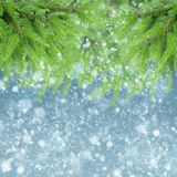 Met spar en sneeuw Royalty-vrije Stock Afbeeldingen