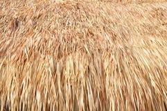 Met stro bedek dak Stock Afbeelding