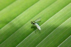 Metaalkleurentussenvoegsel op groen blad Stock Fotografie