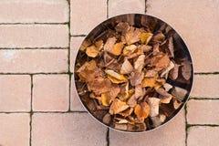 Metaalkom met bladeren (de herfst) Royalty-vrije Stock Foto's