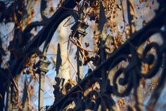 Metaalomheining met patronen en staken, met droge klimop worden overwoekerd die stock foto's