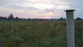 Metaalschoorsteen voor cornfield bij zonsondergang royalty-vrije stock afbeelding